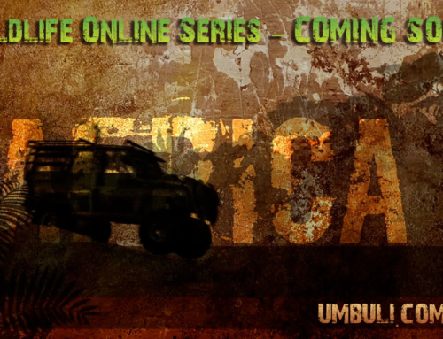 BUNDUBASH Online TV
